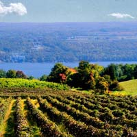 Fingerlakes Vineyard