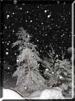 Photograph of a snowy woods remeniscent of Robert Frost's poem.