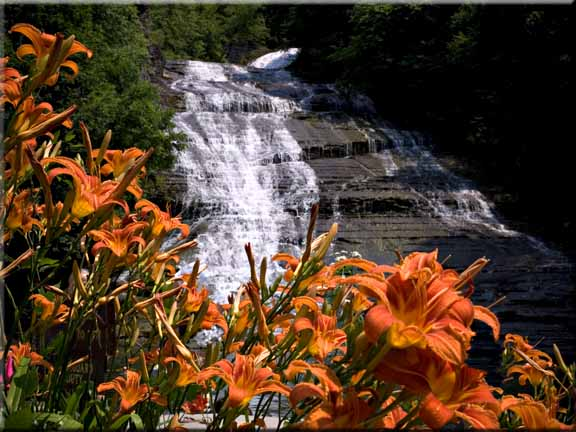 Blooming Daylilies in front of Buttermilk Falls.