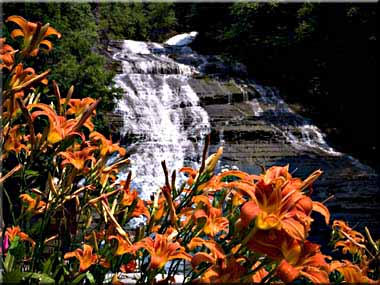 Daylilies blooming in front of Buttermilk Falls.