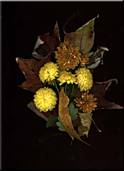 A Photographic arrangement chrysanthemums and dry leaves.