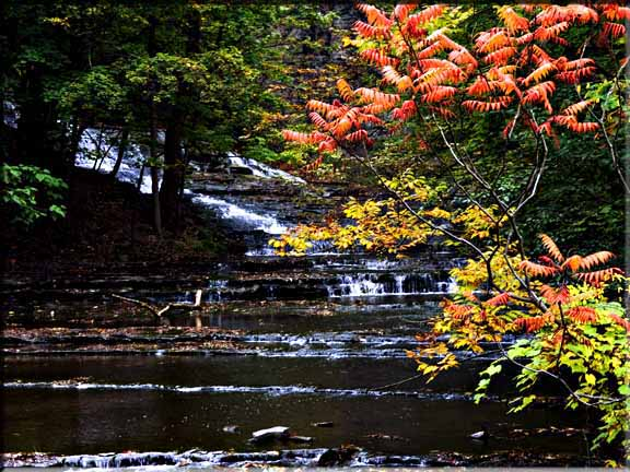 Autumn Sumac highlighted against a waterfall in Cascadilla Gorge, Ithaca, NY.