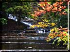 Photo of Cascadilla Gorge waterfall in autumn with a scarlet sumac.