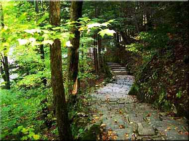 Photography of Stone Steps leading down into the woods.