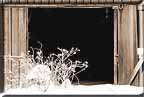 A view of an open barn door with frosted weeds in front.